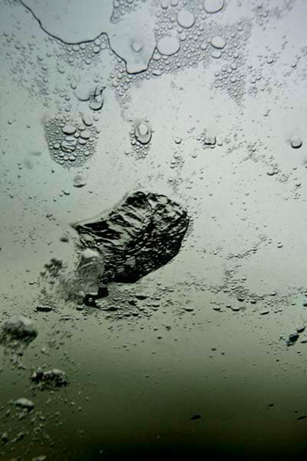 Подводные фото Френсиса Мэтью