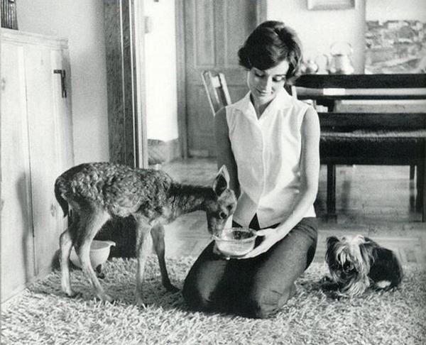 Одри Хепберн со своими питомцами олененком Пиппином и йоркширским терьером миссис Фамоус
