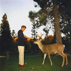 Джон Кеннеди кормит оленя, 1963 год