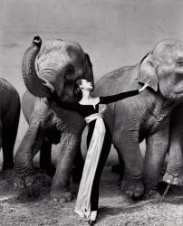 Довима со слонами, вечернее платье от Dior