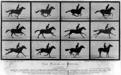 """Эдвард Мейбридж. """"Лошадь в движении"""""""