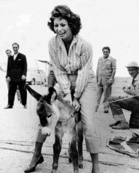 """Софи Лорен на съемках фильма """"Гордость и страсть"""", 1956 год"""