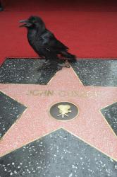Звезда Джона Кьюсака на Голливудской Аллее славы
