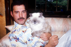 Фредди Меркьюри и его кошки